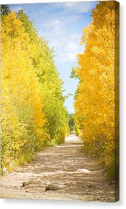 Autumn Back County Road Canvas Print by James BO  Insogna