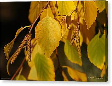 Autumn Birch In Southern Oregon Canvas Print by Mick Anderson