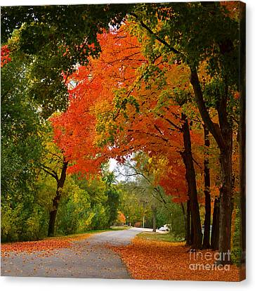 Autumn Canopy Canvas Print by Sue Stefanowicz