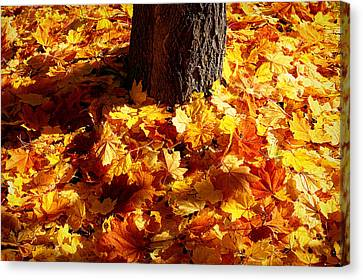 Canvas Print featuring the photograph Autumn Carpet by Linda Edgecomb