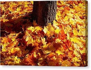 Autumn Carpet Canvas Print by Linda Edgecomb