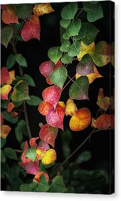 Autumn Color Canvas Print by Brenda Bryant