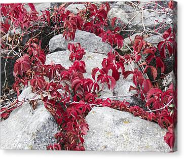 Autumn Color Is Red Canvas Print