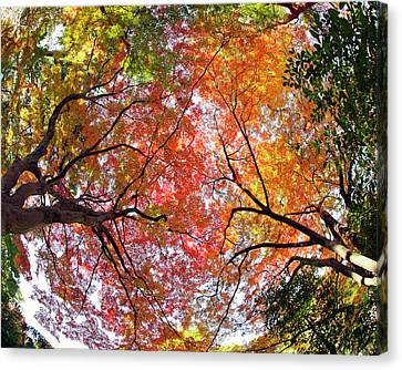 Autumn Color Canvas Print by Shuya Seno Photography