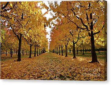 Autumn Colors At He's Best Canvas Print