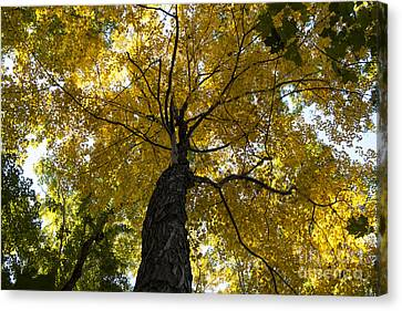 Autumn Colors Canvas Print by Darleen Stry