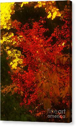 Autumn Colors Canvas Print by Jeff Breiman