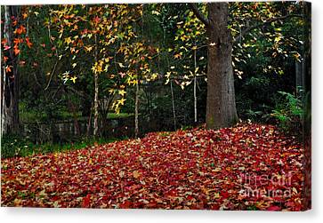 Autumn Colors Canvas Print by Kaye Menner