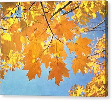 Autumn Colors Canvas Print by Kim Hojnacki