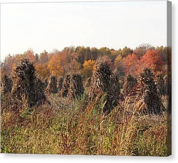 Autumn Corn Canvas Print by Donna Bosela