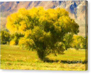 Autumn Cottonwood Canvas Print