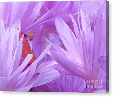 Canvas Print featuring the photograph Autumn Crocus by Michele Penner