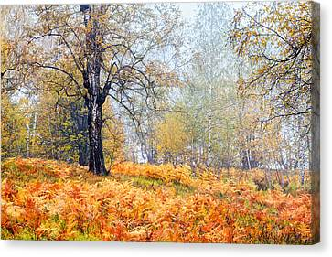 Autumn Dreams Canvas Print by Evgeni Dinev