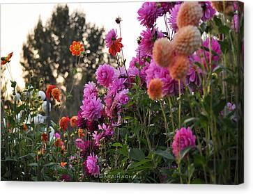 Autumn Flowers Canvas Print by Sarai Rachel