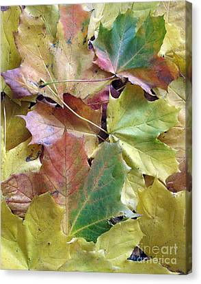 Autumn Foliage Canvas Print by Ausra Huntington nee Paulauskaite