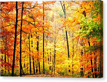 Canvas Print featuring the photograph Autumn Forest by Randall Branham
