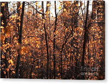 Autumn Glory Canvas Print by Chris Hill