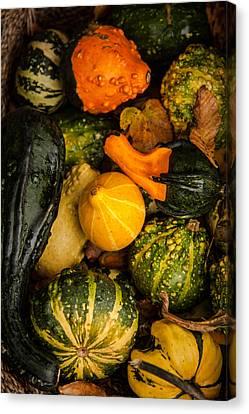 Autumn Gourds Collage Canvas Print