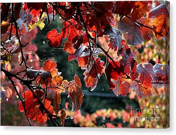 Autumn Grapes And Spider Webs Canvas Print