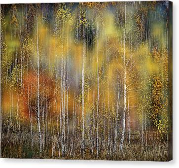 Autumn Impression Canvas Print