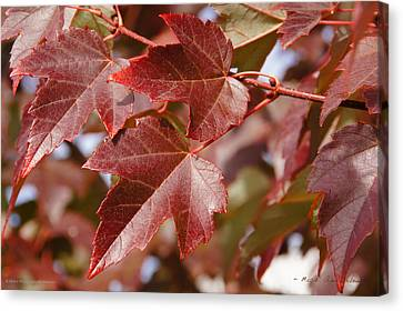 Autumn In My Back Yard Canvas Print by Mick Anderson