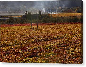 Autumn In Napa Valley Canvas Print by Garry Gay