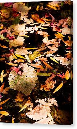 Autumn In Texas Canvas Print