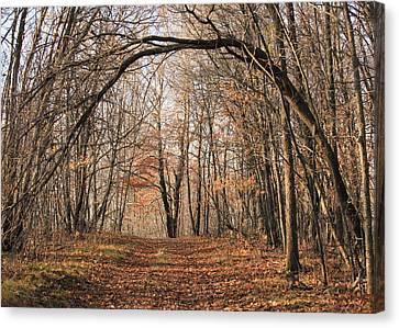 Canvas Print featuring the photograph Autumn In The Woods by Penny Meyers