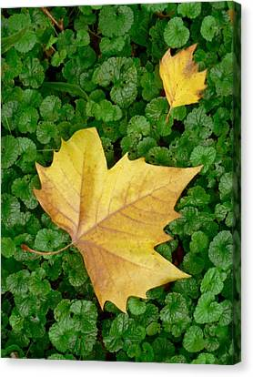 Autumn Just Began Canvas Print by Philippe Taka