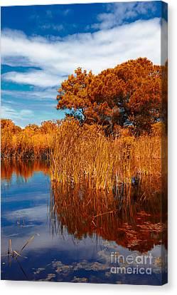 Autumn Landscape Canvas Print by Gabriela Insuratelu