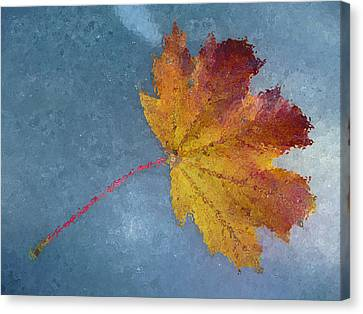 Autumn Leaf Under Glass Canvas Print by Margie Avellino