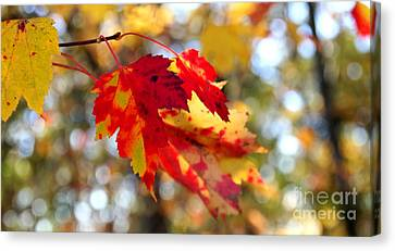 Canvas Print featuring the photograph Autumn Leaves by Adrian LaRoque