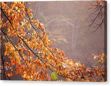 Canvas Print featuring the photograph Autumn Leaves And Fog by Tom Singleton
