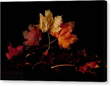 Canvas Print featuring the photograph Autumn Leaves by Beverly Cash
