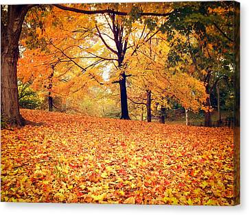 Autumn Leaves - Central Park - New York City Canvas Print by Vivienne Gucwa