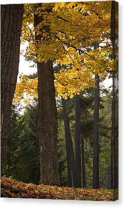 Canvas Print featuring the photograph Autumn Leaves by Darleen Stry