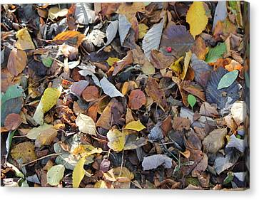 Canvas Print featuring the photograph Autumn Leaves by David Grant