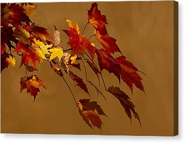 Canvas Print featuring the photograph Autumn Leaves by Judy  Johnson
