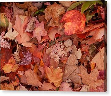 Canvas Print featuring the photograph Autumn Leaves by Karen Molenaar Terrell