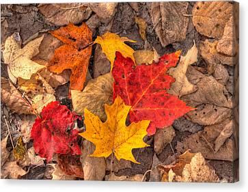 Autumn Leaves Canvas Print by Matt Dobson