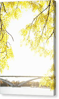Autumn Leaves On Branch With Bridge In Background, Close-up Canvas Print by Johner Images