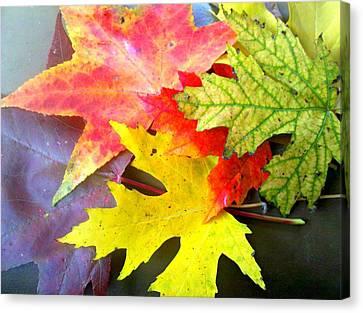 Autumn Leaves Canvas Print by Sandra Lira