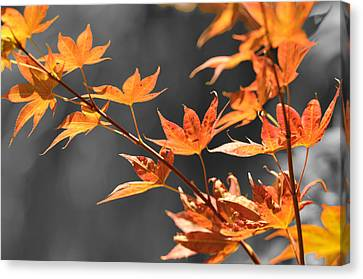 Autumn Leaves  Canvas Print by Sandy Fisher