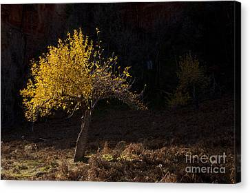 Autumn Light Canvas Print by Mike  Dawson