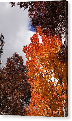 Autumn Looking Up Canvas Print by Mick Anderson