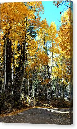 Autumn Magic Canvas Print by Lynn Bawden