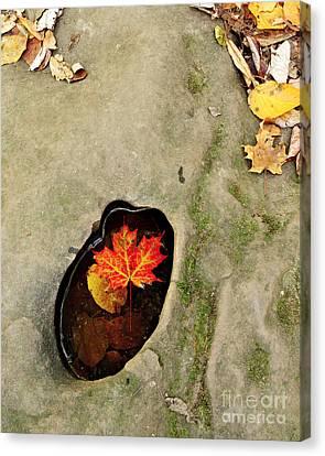 Autumn Maple Leaf Canvas Print by Matt Tilghman
