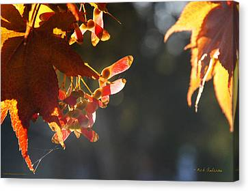 Autumn Maple Canvas Print by Mick Anderson