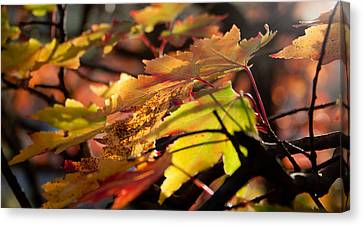 Autumn Morning Canvas Print by David Troxel