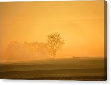 Autumn Morning Canvas Print by Philippe Sainte-Laudy Photography